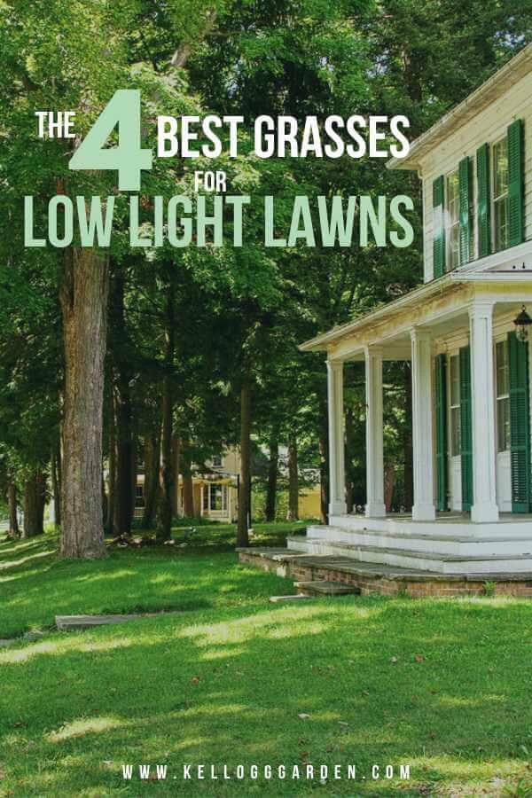 THE 4 BEST GRASSES FOR LOW LIGHT YARDS | Kellogg Garden Products