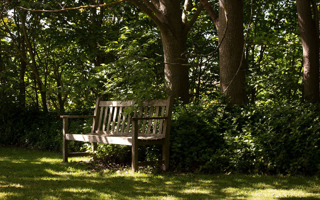 Bench in the shade surrounded by trees