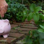 Budget-challenged gardens