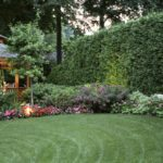 Best shady grasses for low light yards