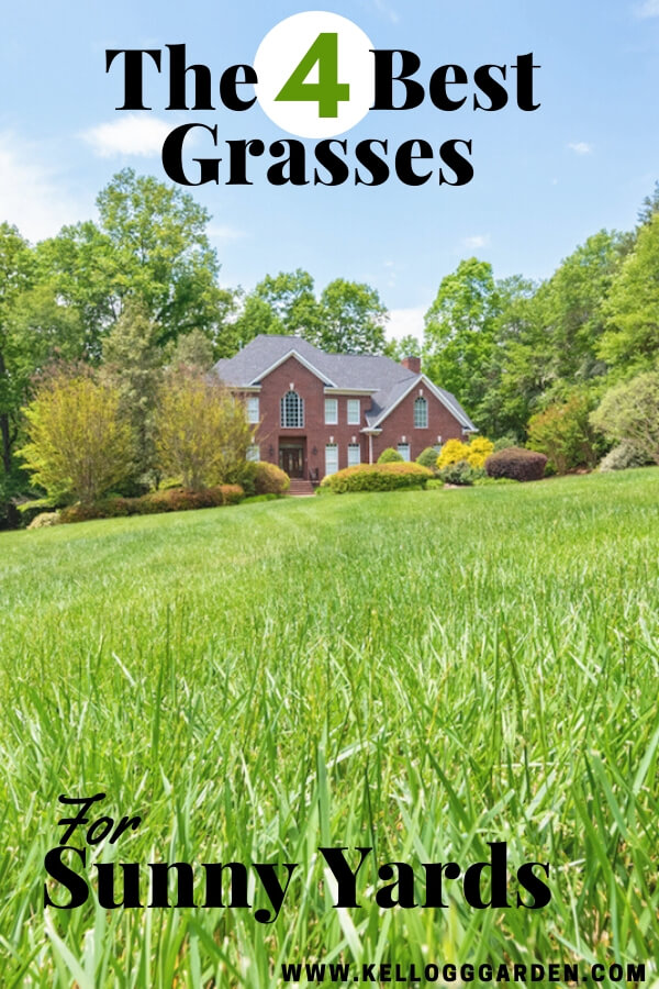 """Red house with green, sunny grass lawn with text, """"the 4 best grasses for sunny yards"""""""