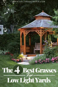 "Arbor with text, ""The 4 best grasses for low light yards"""
