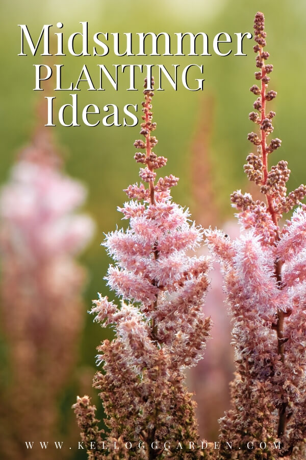 """Pink bush with text, """"Midsummer planting ideas"""""""