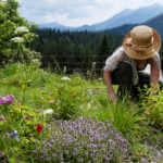 gardener planting mountains