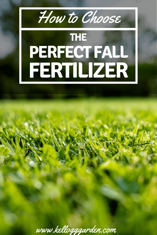 6 steps to fertilizing your fall lawn 2