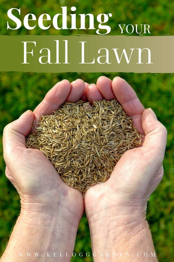 "Hands holding grass seed with text, ""Seeding your fall lawn"""