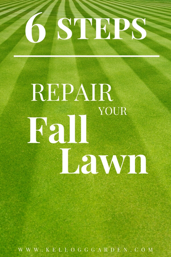 "Green grass with text, ""6 steps to repair your fall lawn"""