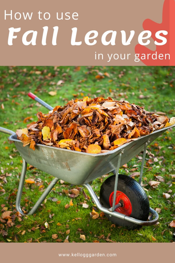 """Wheel-barrel full of fall leaves with text, l""""How to use fall leaves"""""""