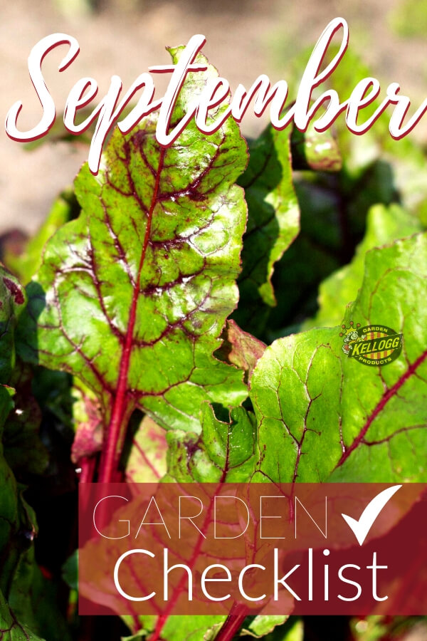 """Close up of red and green lettuce leafs with text, """"September garden checklist"""""""
