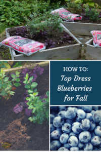 """Collage of blueberry planters and soil with text, """"How to Top dress blueberries for fall"""""""
