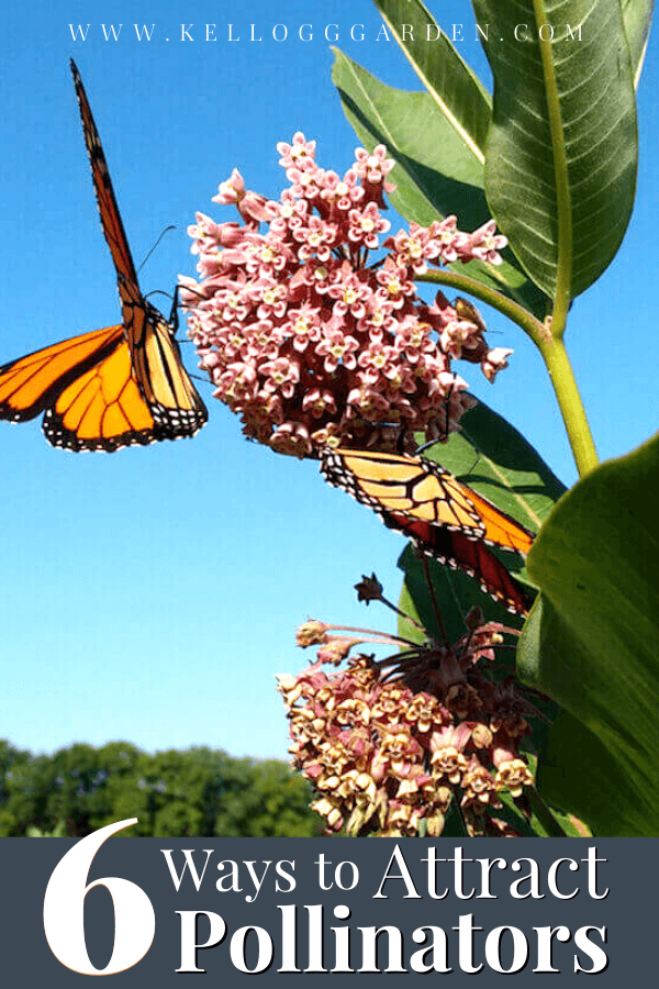 monarch butterfly on a pink flower