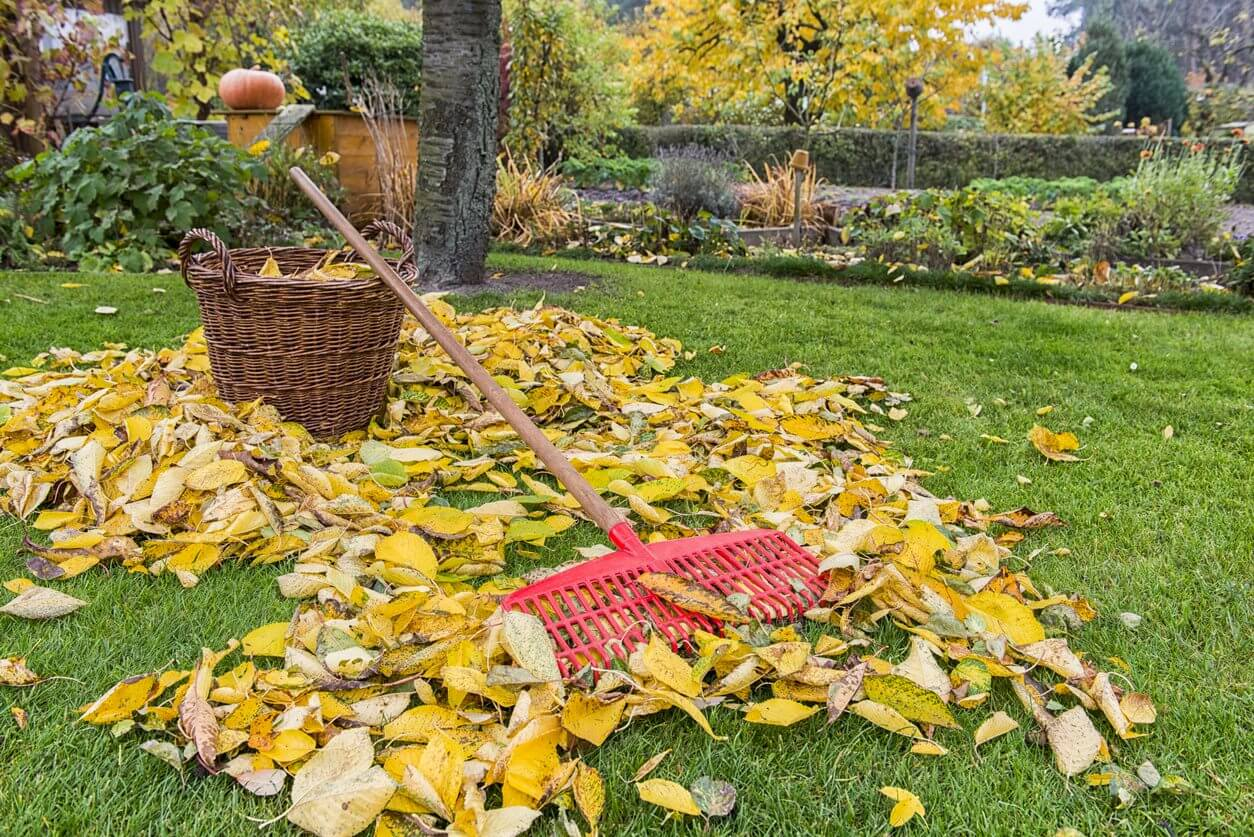 How to Use Fall Leaves in Your Garden