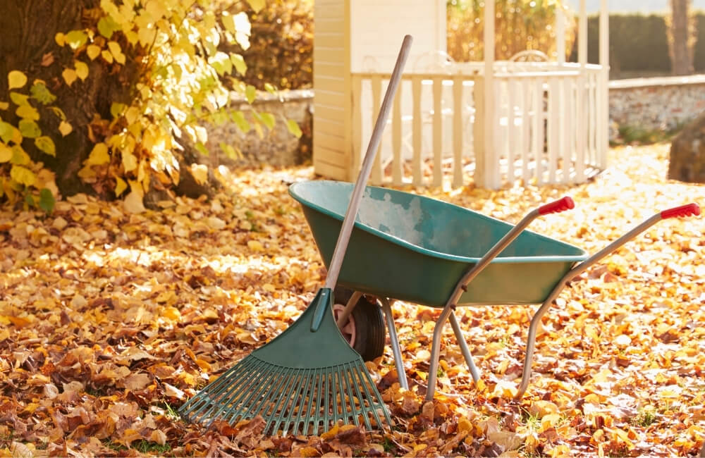 Wheel barrel with a rake leaning against it in a yard filled with fall leaves.