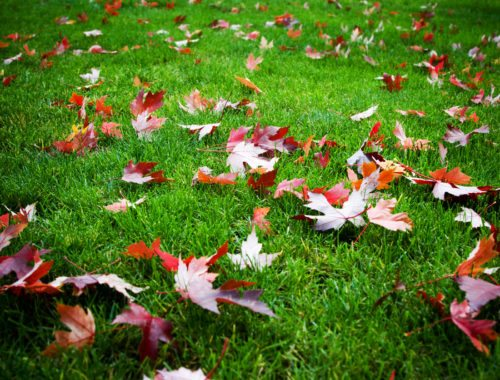 How to Fertilize Your Fall Lawn