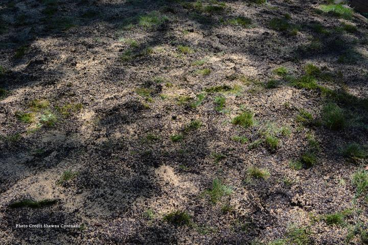 Fix your lawn with soil
