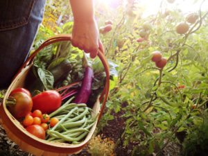Why you should grow your own organic food