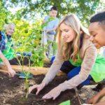 How to start an organic school garden