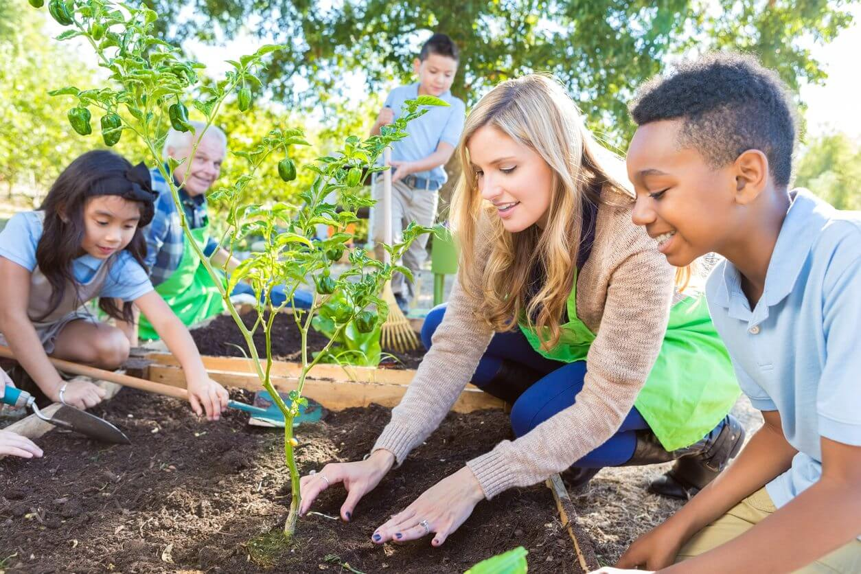 How to start an organic school garden