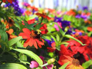 pollinator flower border