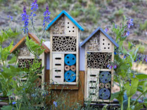 pollinator insect house