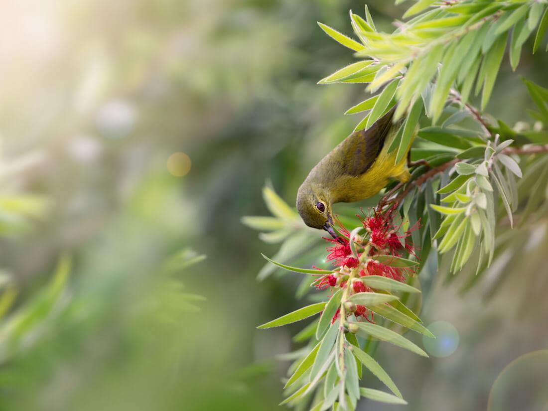 pollinator native plants
