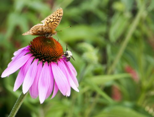 How to Support Pollinators