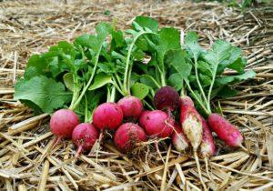 Straw Mulch in the Garden