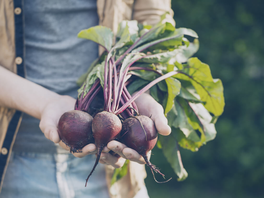 harvest beets