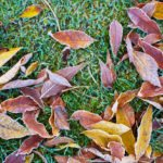 Winterizing Fertilizers