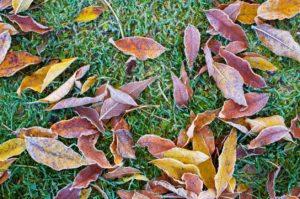 Winterizing Fertilizers