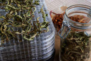 Herbs on a drying rack
