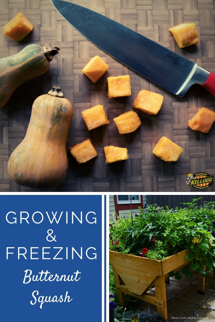 "Butternut squash on a cutting board and a picture of a raised bed garden in a collage with text, ""Growing and freezing butternut squash"""