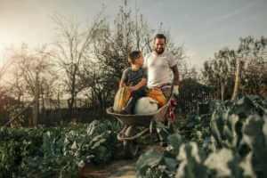 Dad pushing son in wheelbarrow full of pumpkins through a gardenn.