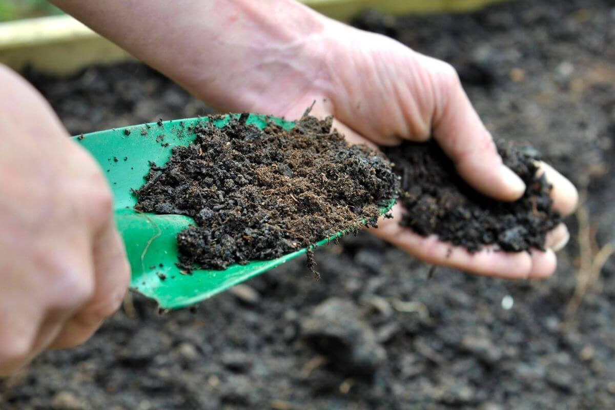Green trowel and hand digging in rich garden soil.