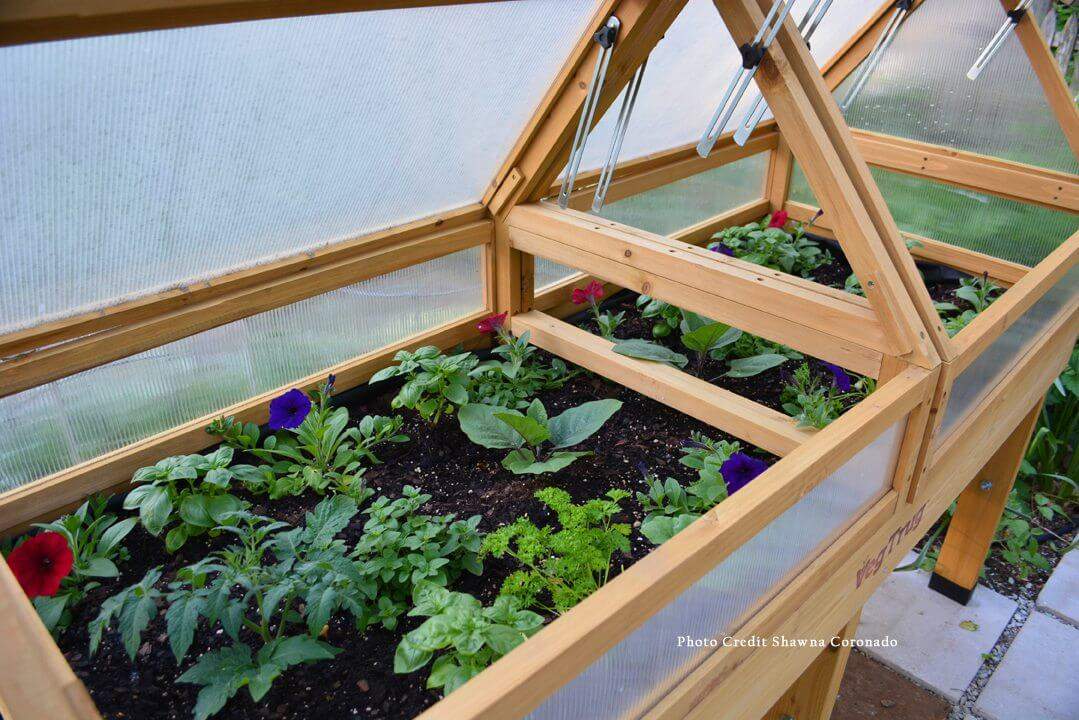 Growing Butternut Squash with a Cold Frame
