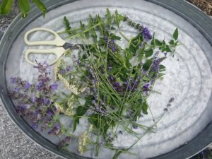 Cut Herbs to Store them for Winter