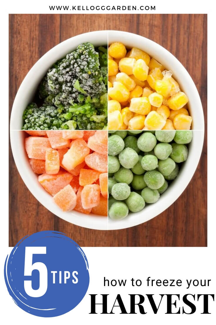 "Frozen vegetables in a bowl with text, ""5 tips, how to freeze your harvest"""