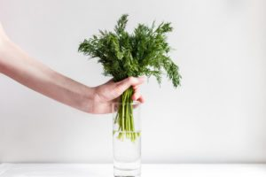 How to Grow Herbs in Water