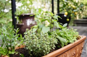 How to grow herbs in a container