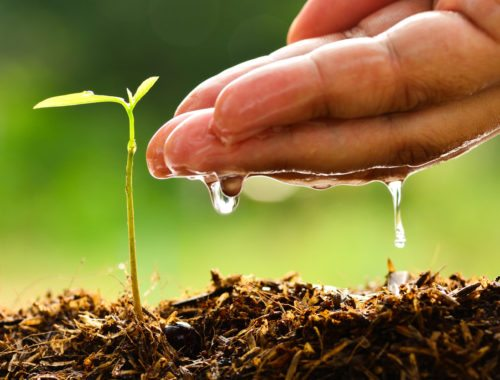 How Organic Gardening is Good for the Environment