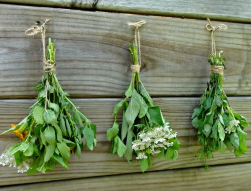How to Store Herbs for Winter