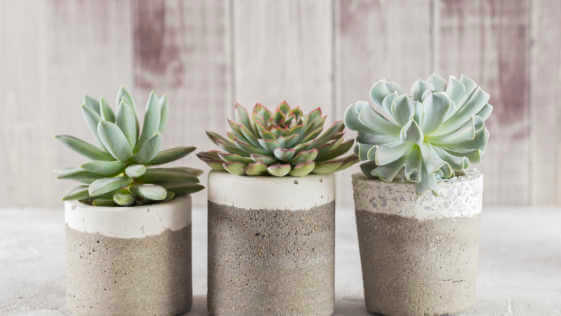collection of succulents on a light colored table