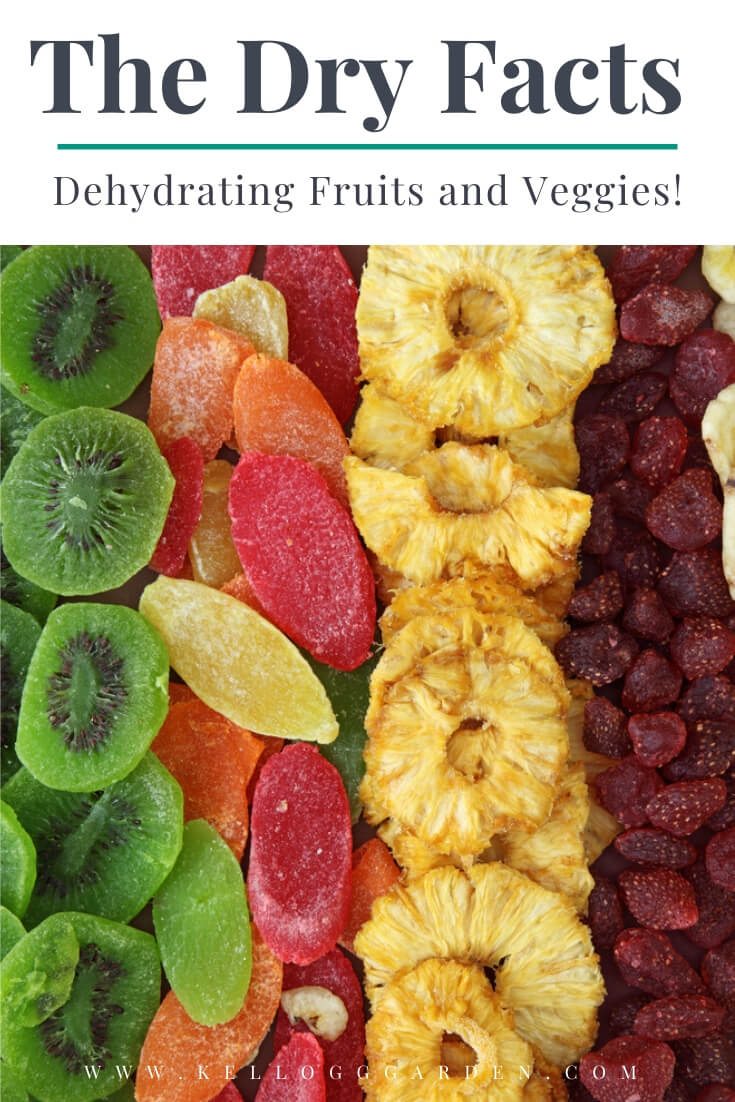 "Rows of dried fruits with text, ""The dry facts, dehydrating fruits and veggies"""