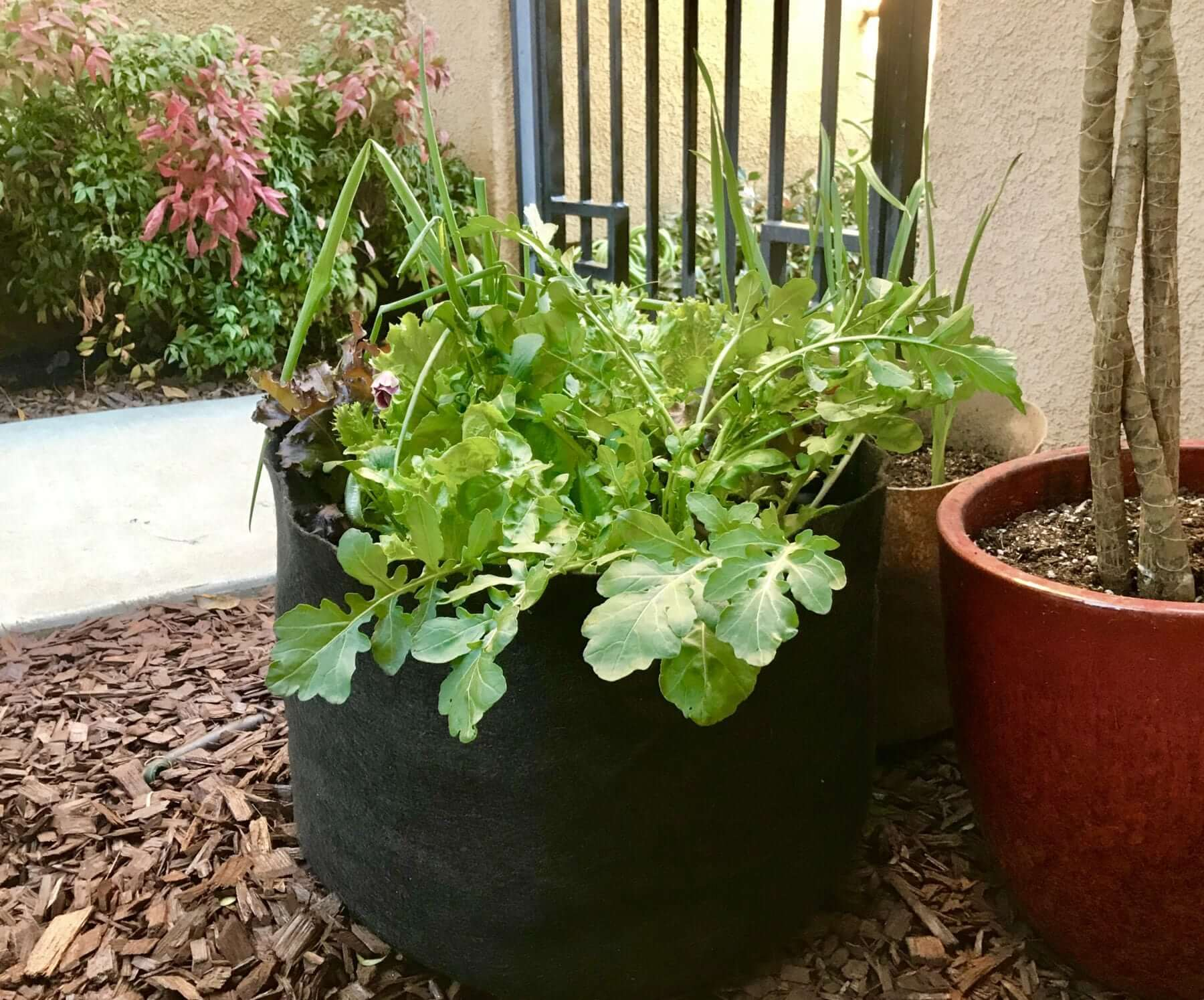 Improving Your Garden With Fabric Grow Bags