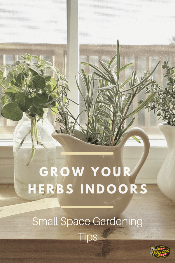 Growing herbs inside