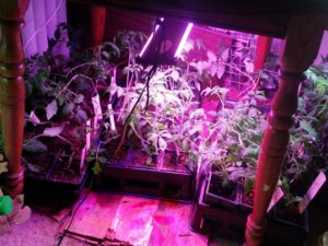 LEDs are important for growing in low light situations