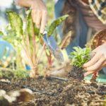 Starting your Organic Kitchen