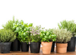 Herbs lined up