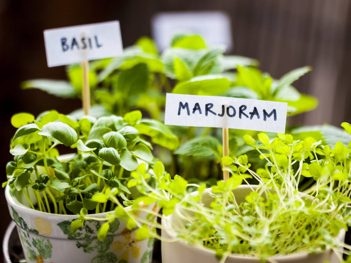 Herbs with labels