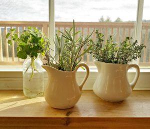 Rooting herbs in winter